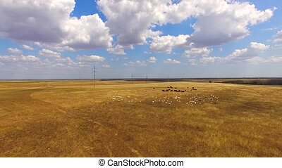 Goats And Cows Grazing At Farmland