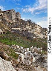 Goats grazing on the hillside