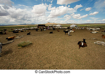 Goats on the steppes - Everywhere you could meet goats