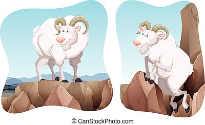 Goats standing on the cliff