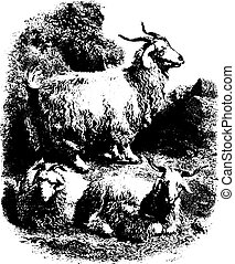Goats with horns, vintage engraving.
