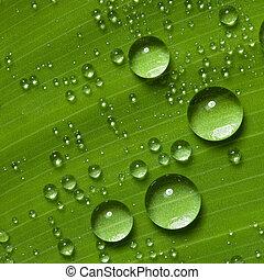 gocce acqua, su, fresco, foglia verde