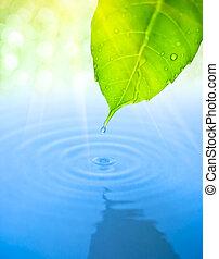 goccia acqua, cadere, da, foglia verde, con, ondulazione