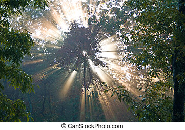 Gods Glory - A shot of the sunrise coming through the trees.