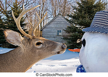 Going For Lunch - Big buck going for the carrot nose of the...
