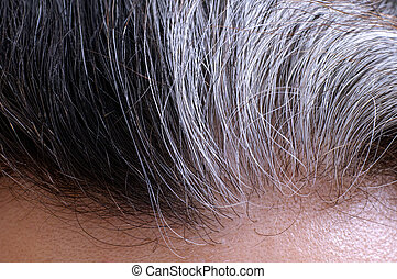 Going gray hair - Going gray. Woman gray and black hair...