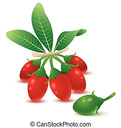 Superfood goji berries. Vector illustration, chinese fruit