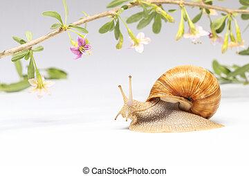 goji, flores blancas, plano de fondo, caracol