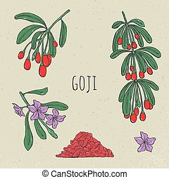 Goji on a branch hand drawn set. Collection blooming, dry berry. Vector sketch isolated colorful vintage illustration.