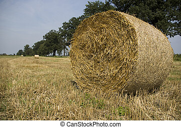 agriculture - gold and blue are colours of agriculture