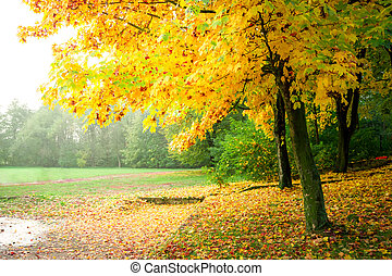 Gold and yellow forest in the autumn, Europe