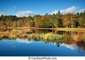 gold autumn forest reflected in lake, Roden, Drenthe,...