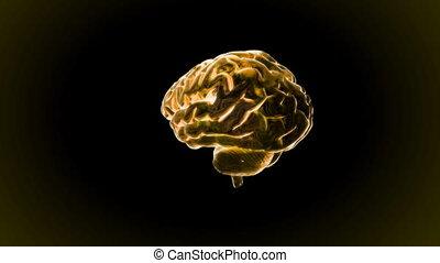 gold brain rotate