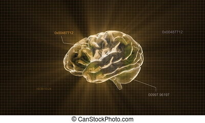 gold brain with code