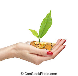 Gold Coins and plant in woman hand isolated on white background