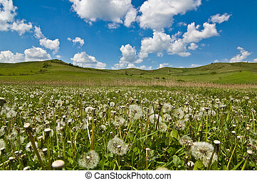 gold field with blue sky and cloud