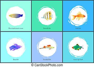 Gold Fish and Blue Tamarin Set Vector Illustration - Gold...