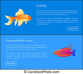 Gold Fish and Flasher Posters Vector Illustration - Goldfish...