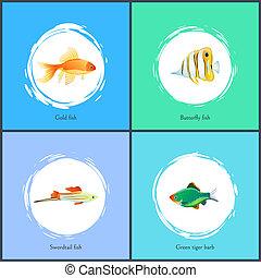 Gold Fish and Green Tiger Barb Vector Illustration - Gold...
