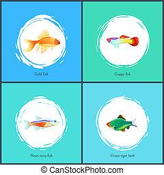 Gold Fish and Neon Tetra Set Vector Illustration - Gold fish...