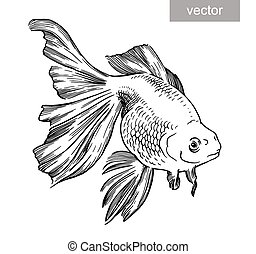Gold fish drawn illustration underwater engraving vector -...