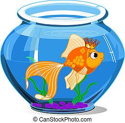 Gold fish in aquarium on white background