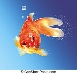 Gold fish facing the viewer, with some water bubbles, on...
