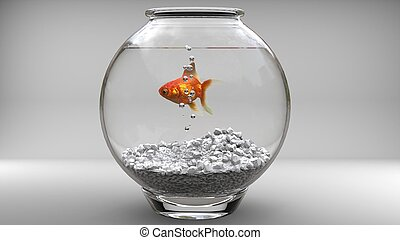 Gold fish in a fishbowl - bubbles