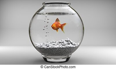 Gold fish in a fishbowl - bubbles - studio shot