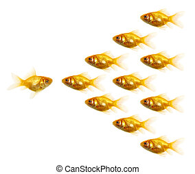 Gold fish - Isolated of the gold fish on white