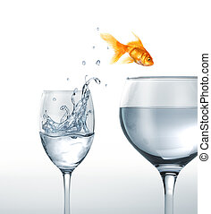 Gold fish jumping from a glass of water, to a larger one. On...