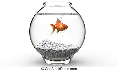 Gold fish swimming in a fishbowl