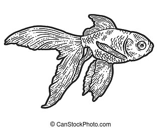 Gold fish. T-shirt apparel print design. Scratch board imitation. Black and white hand drawn image.