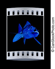 Gold fish. The film strip