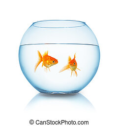 gold fishes in a fishbowl