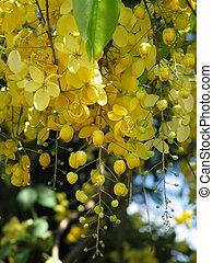 Gold Flowers - Golden yellow tropical flower