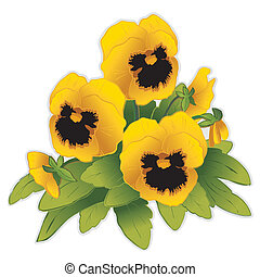 Gold Pansy Flowers - Gold Pansy flowers (Viola tricolor...