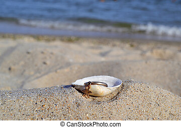 Gold ring in a shell