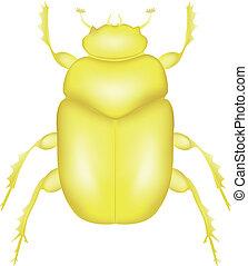 Scarab Beetle - Gold Scarab Beetle