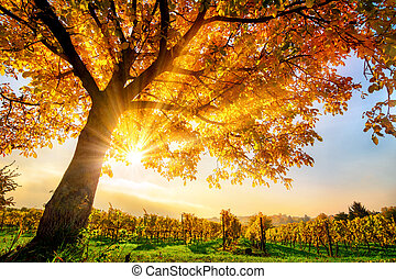 Gold tree on a vineyard in autumn