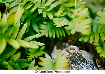 Gold wedding rings and an engagement ring on a large stone against a background of green fern leaves.