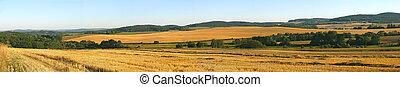 Gold Wheat field panorama