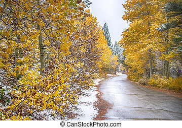 Golden Aspen and snow lined road
