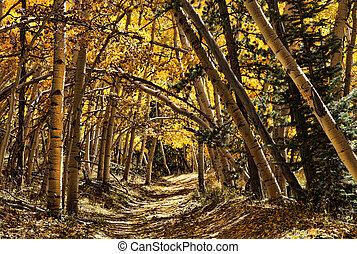 Golden Aspen Archway