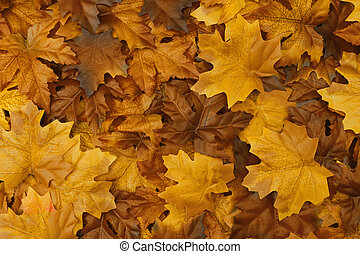 Golden autumn background with fall leaves