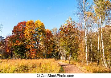 Golden autumn. Beautiful Autumnal park. Beauty nature scene. Autumn landscape
