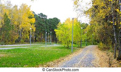 golden autumn birches green grass lawns in city park -...