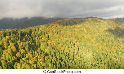 Golden autumn drone view of forest landscape with yellow ...