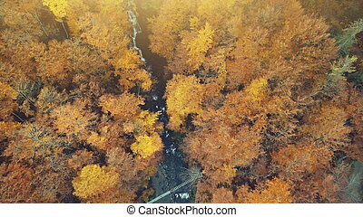 Golden autumn forest creek scenery aerial view
