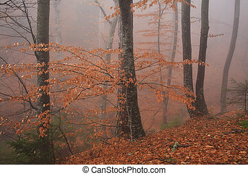 Golden autumn forest in the fog